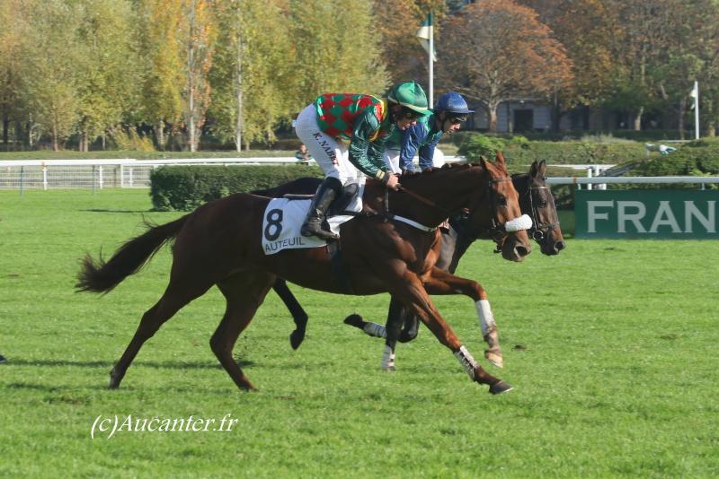 Photos Auteuil 6-11-2016 8164585J6A0243