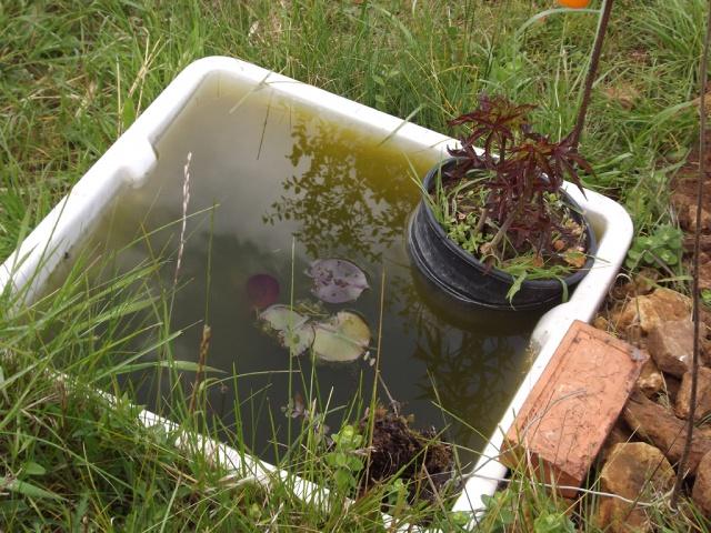 baignoire transformée en mini-bassin 827713bassin1