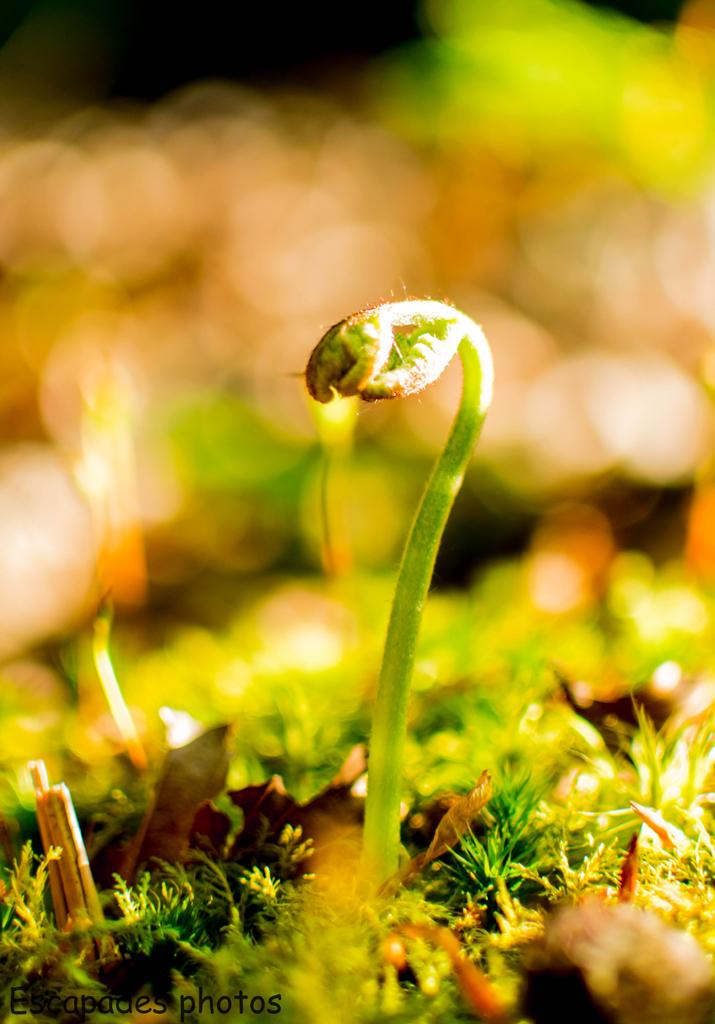 naissance dans la nature... 830157480947DSC0139
