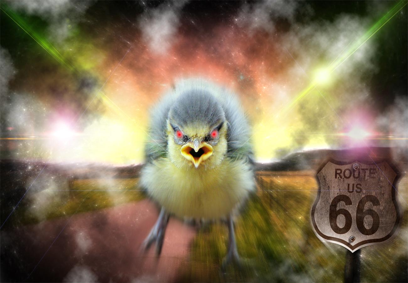 Oisillons by Staffilou ... 833480badbird