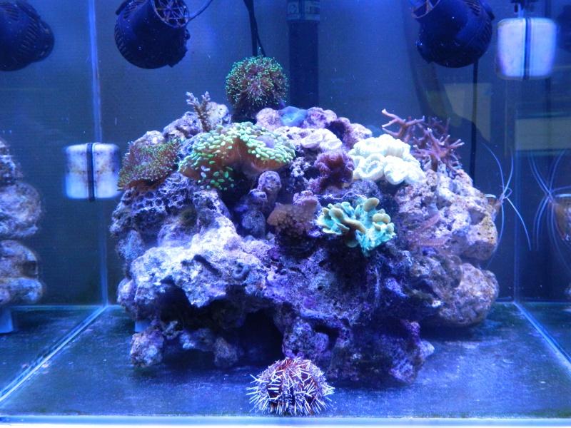 Aka's Reef Cube ! 837984DSCN0281