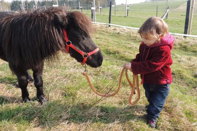 Estimation de nos chevaux ! - Page 4 838023DSCN3369
