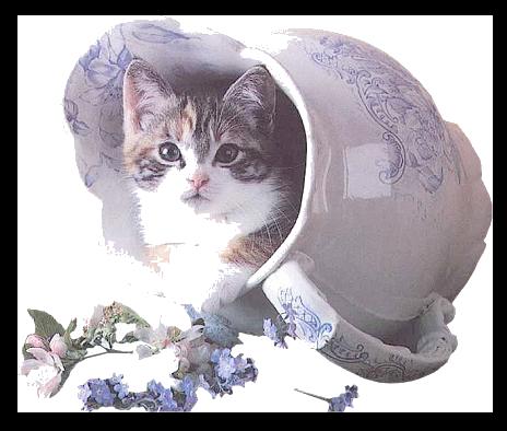 Tubes chats 839347GibMelgibsonij8