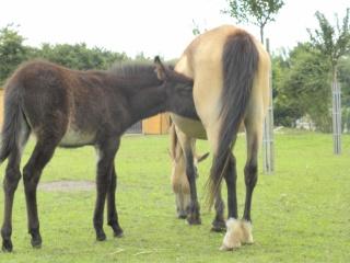 Présentez-nous vos chevaux ! <3 840705DSCN1370