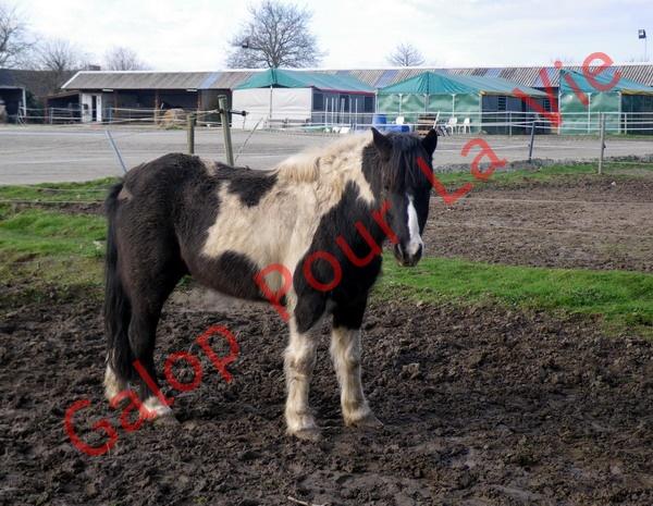LOONY -  ONC poney né en 2001 - Adopté en juin 2011 par Carole 840750IMGP6960