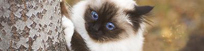 La Guerre des Clans : Magic Cats 842221image