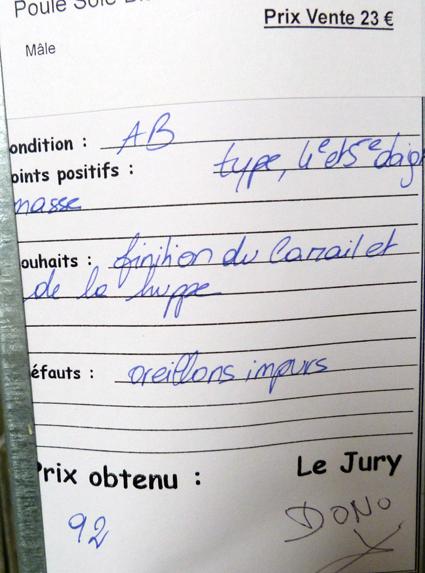 dorking - LUC-SUR-MER (avril 2013) photos des grandes races étrangères 843630P1080939