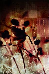 Papillon du Crépuscule