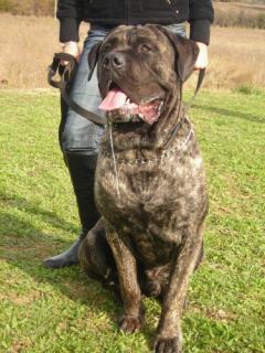 Ici venez remplir la fiche d'identité de votre chien avec sa photo à la suite des autres chiens du forum 85442921488021