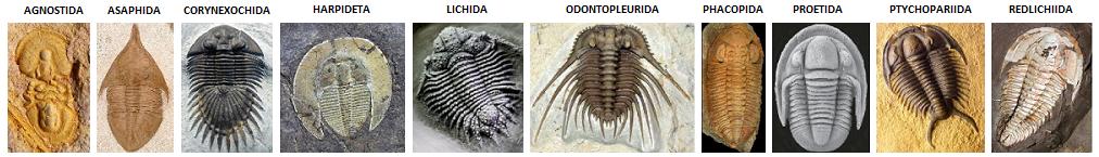 Forum des chercheurs de trilobites