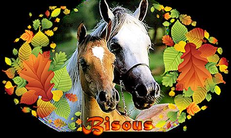 Bon Mercredi 857560horses