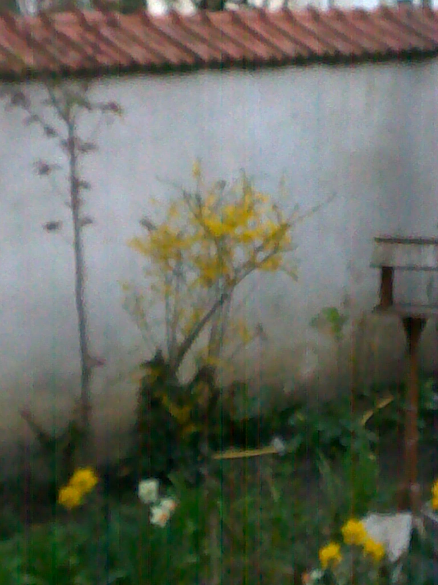 quelques photos de mon jardin 85895714042013140