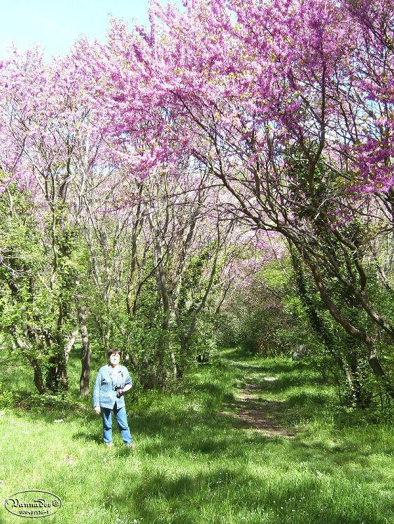 """La Vallée de St Pons """" La Vallée Rose """" à Gemenos Bouches du Rhône ♥♥♥ 862411694"""