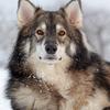 Les images des loups 864979Saskyalien
