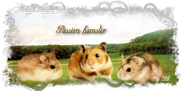 Passion Hamster