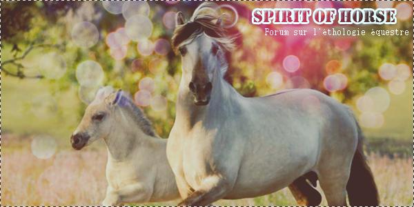 Spirit of Horse