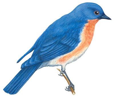 The Blue Bird 873180Sanstitre1