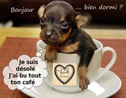 Bon Jeudi 875678bonjourdsolermolly4525824
