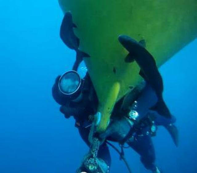 Sur les traces du Commandant Cousteau.... 875909poisson