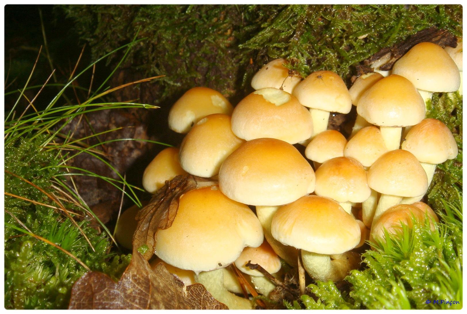 [fil ouvert] les champignons 876529DSC011198
