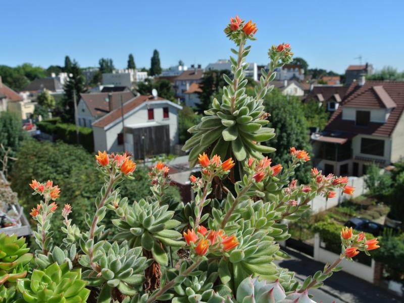 un bouquet de fleurs d'Echeveria pour fêter l'arrivée du soleil! 876654silvergreen16