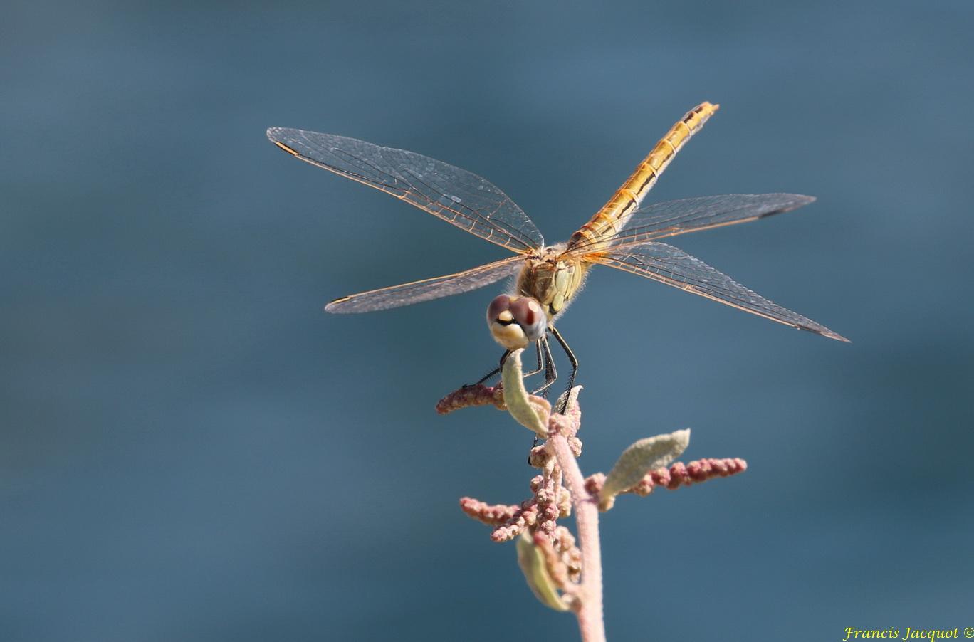 Insectes et Proxi. [Fil Ouvert] 88275514L2