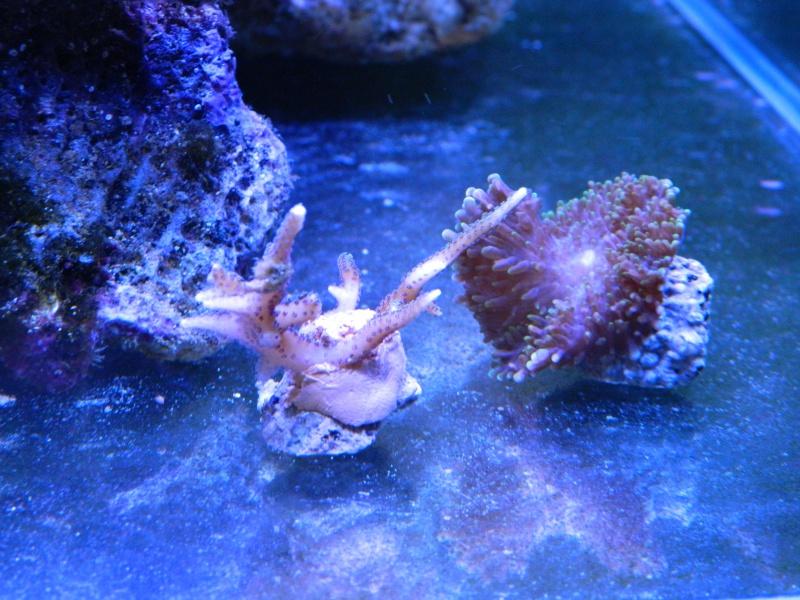 Aka's Reef Cube ! 883599DSCN0043