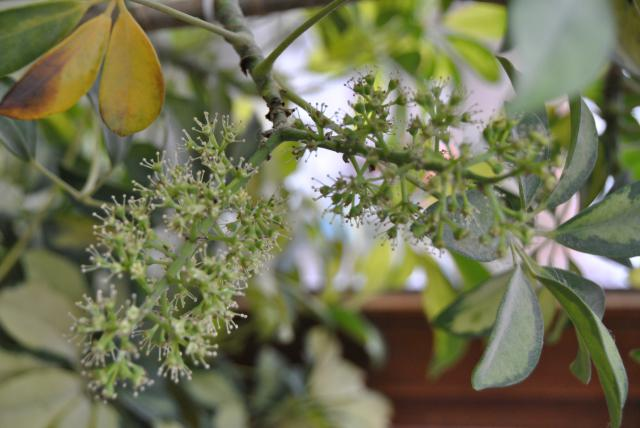 Après les orchidées, les hirondelles, mes plantes d'intérieur.... - Page 6 884037DSC3404JPG
