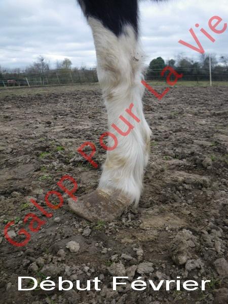 LOONY -  ONC poney né en 2001 - Adopté en juin 2011 par Carole 8852524FEVRIER2