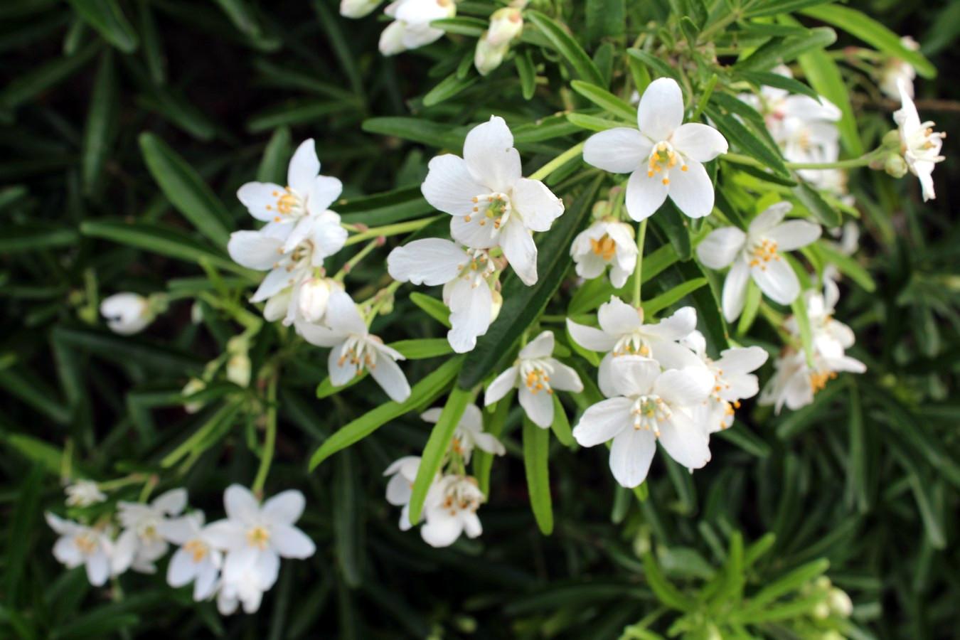 [Fil ouvert] Fleurs et plantes - Page 8 886772064Copier