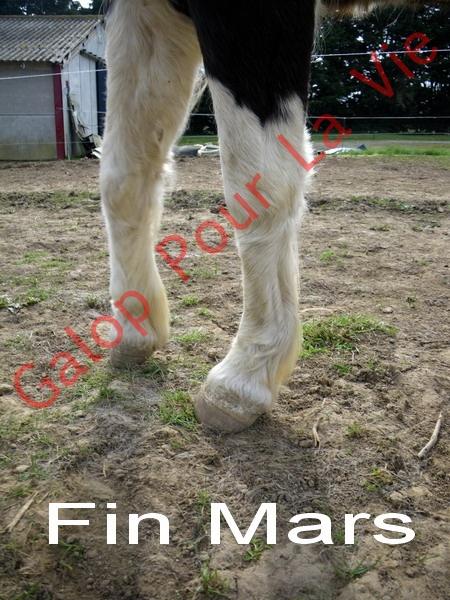 LOONY -  ONC poney né en 2001 - Adopté en juin 2011 par Carole 88877526MARS2