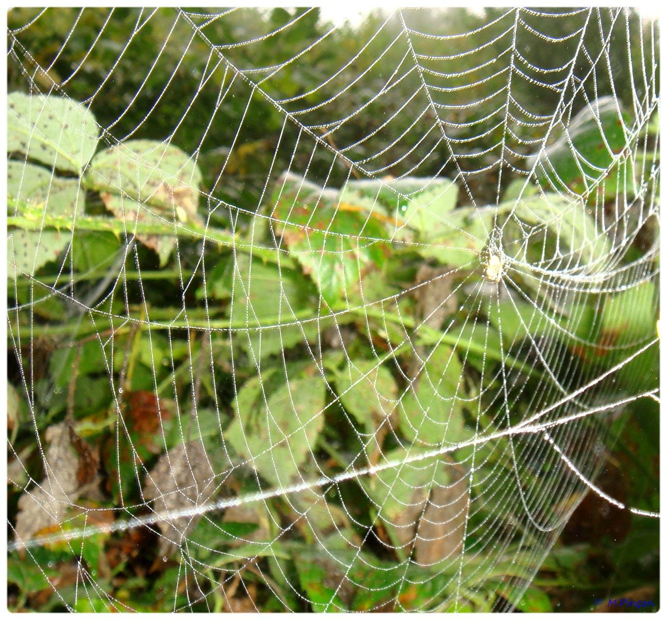 (FIL OUVERT à tous) vous aimez les araignées? - Page 5 890302DSC011285