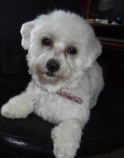 Ici venez remplir la fiche d'identité de votre chien avec sa photo à la suite des autres chiens du forum 895747paloma28