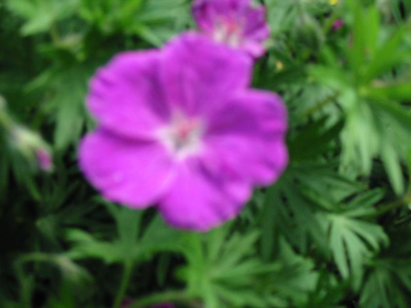 le jardin de jojo 898755111_1124_IMG