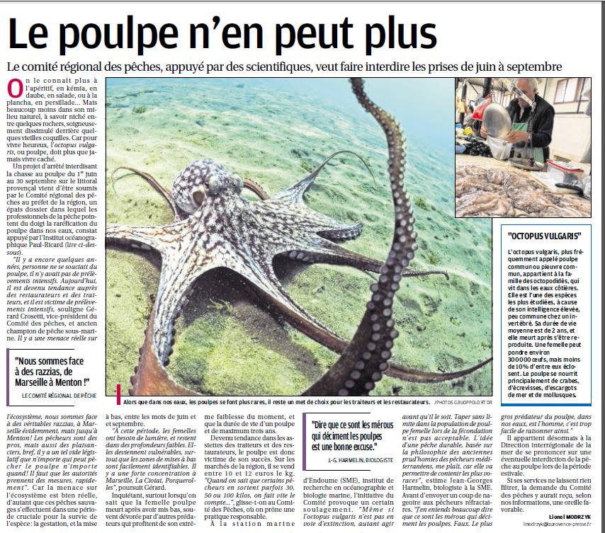 LA FAUNE ANIMALE MEDITERRANEENNE - Page 12 9001557741