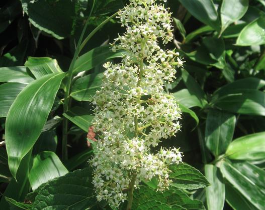 Les fleurs (ou plantes ) contre le cancer. 90531220160907181559