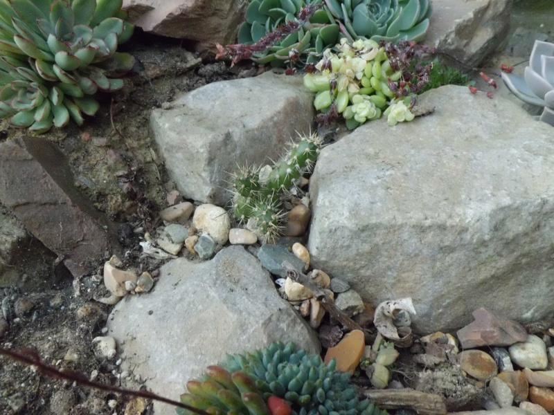 cactus de pô - Page 2 905561CIMG4346