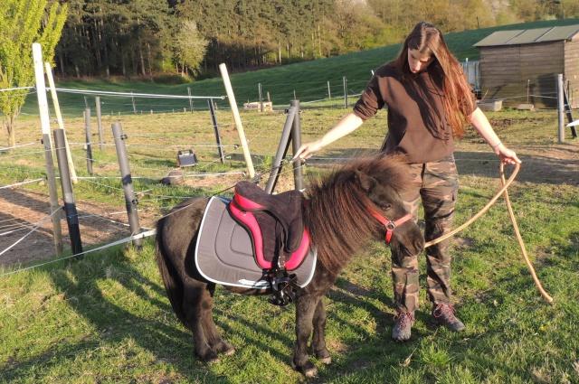 Estimation de nos chevaux ! - Page 4 908068DSCN4357