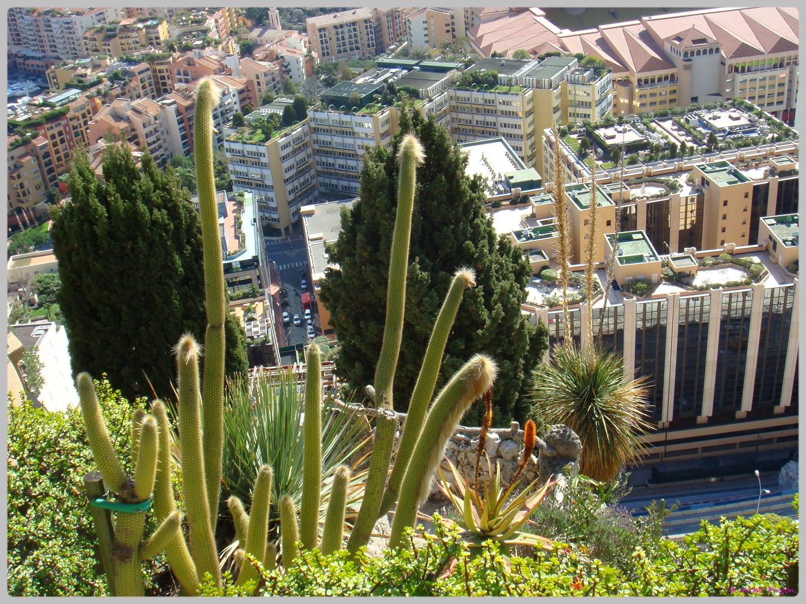 Ballade à Monte-Carlo, Monaco et environs.  911247DSC012189
