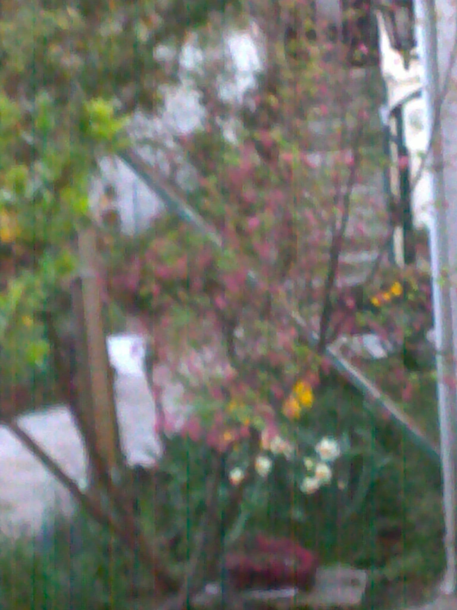 quelques photos de mon jardin 91678114042013141