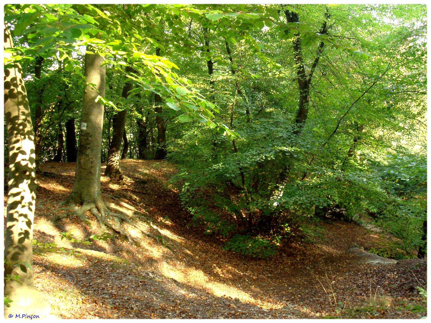 [fil ouvert] la forêt dans tous ses états - Page 6 917651DSC011131