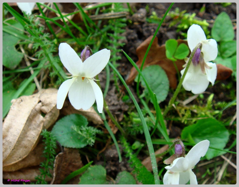[Fil Ouvert] Fleurs 917845DSC012468