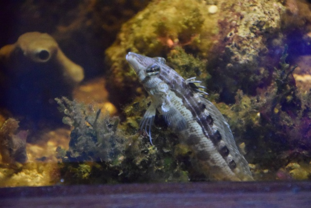 Le nouveau bac du Poissonpané : aquaterrarium de 900L / Nouvelle Calédonie - Page 2 918292DSC0002