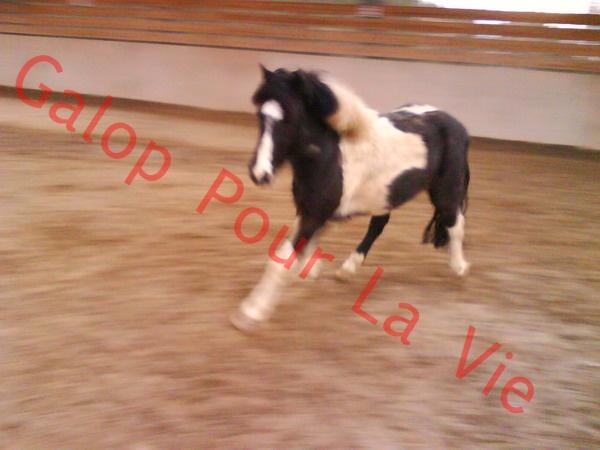 LOONY -  ONC poney né en 2001 - Adopté en juin 2011 par Carole 918392DSC01132