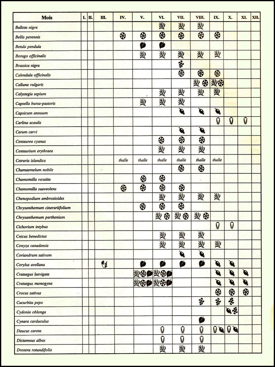RÉCOLTE, SÉCHAGE, PRÉPARATION ET CONSERVATION  DES PLANTES 921178GRNDBX001