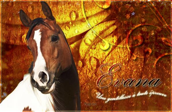 Evana - ♀ - Sauvage 923101evana