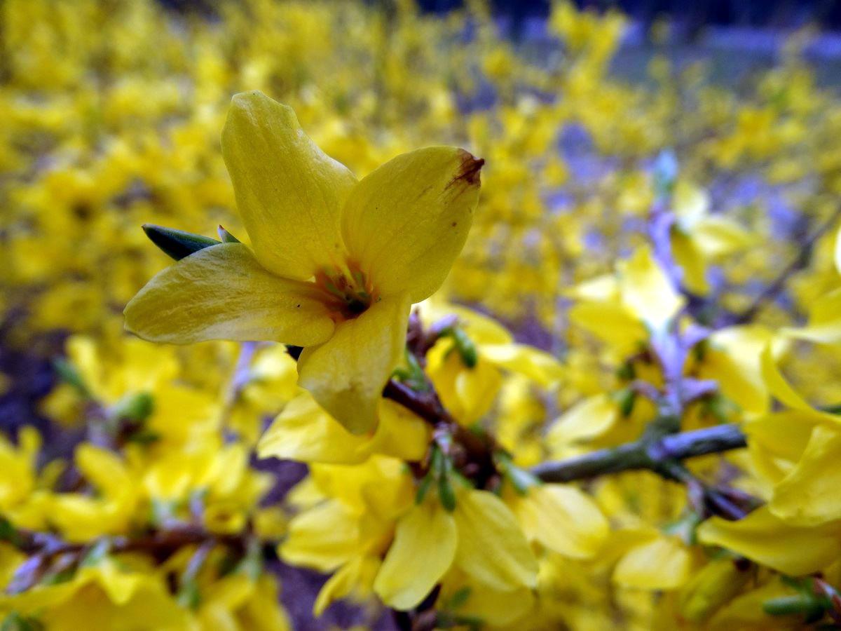 [Fil Ouvert] Fleurs 924254019Copier