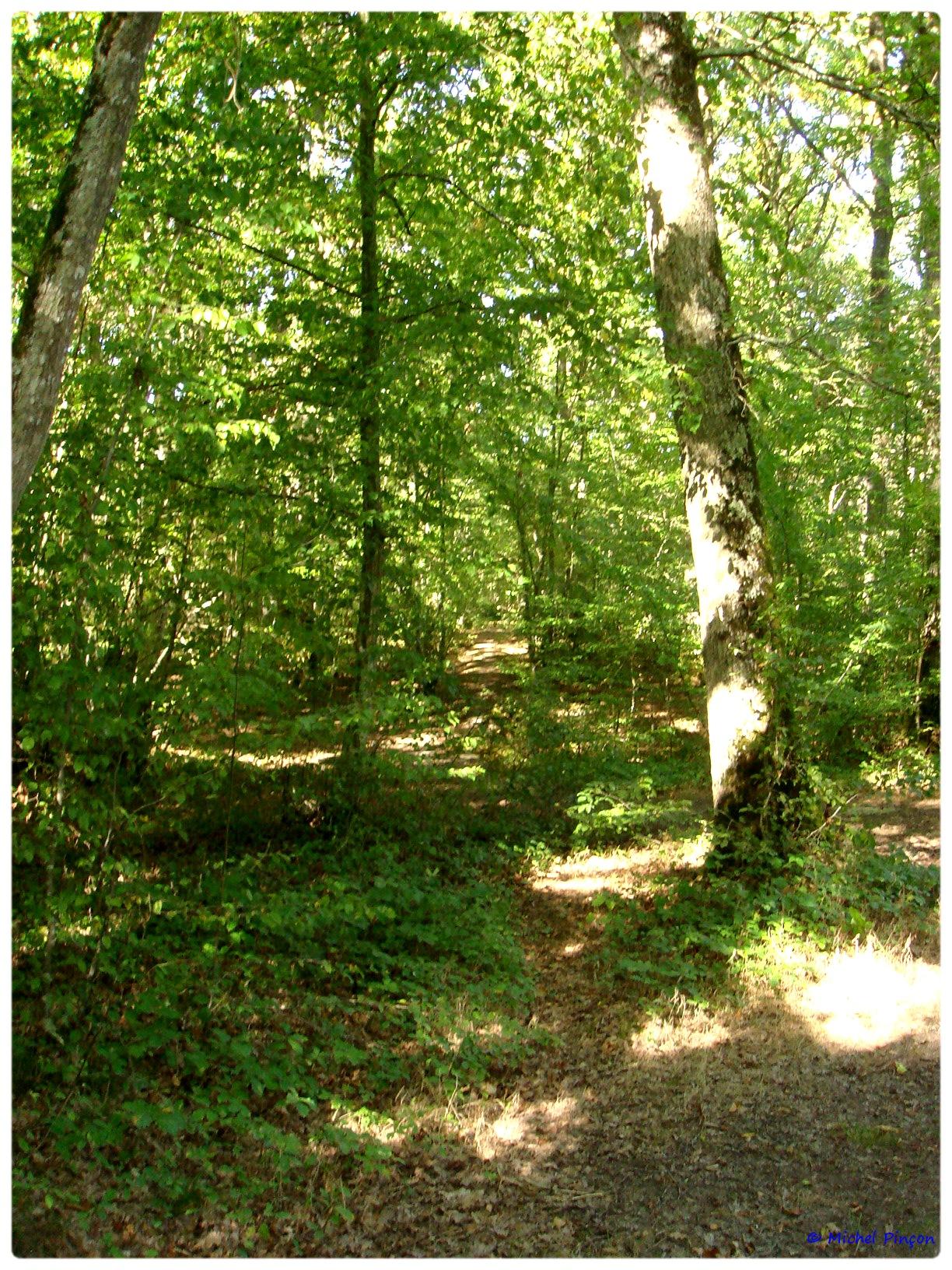 [fil ouvert] la forêt dans tous ses états - Page 6 927563DSC011111