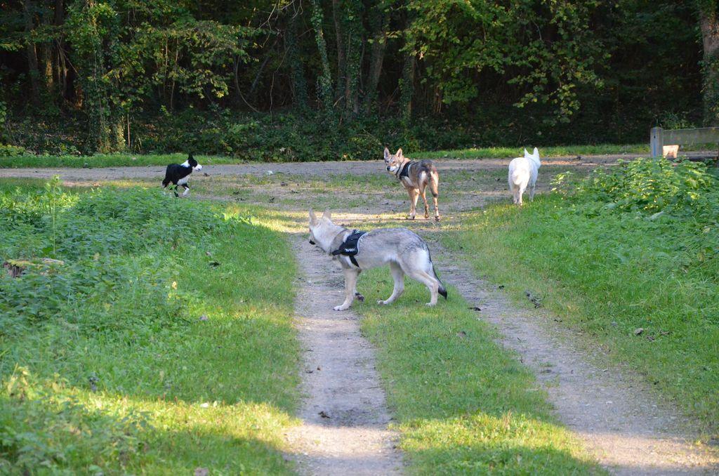 border - L'éducation de ma chienne, Jeune border collie - Page 2 927975DSC2263
