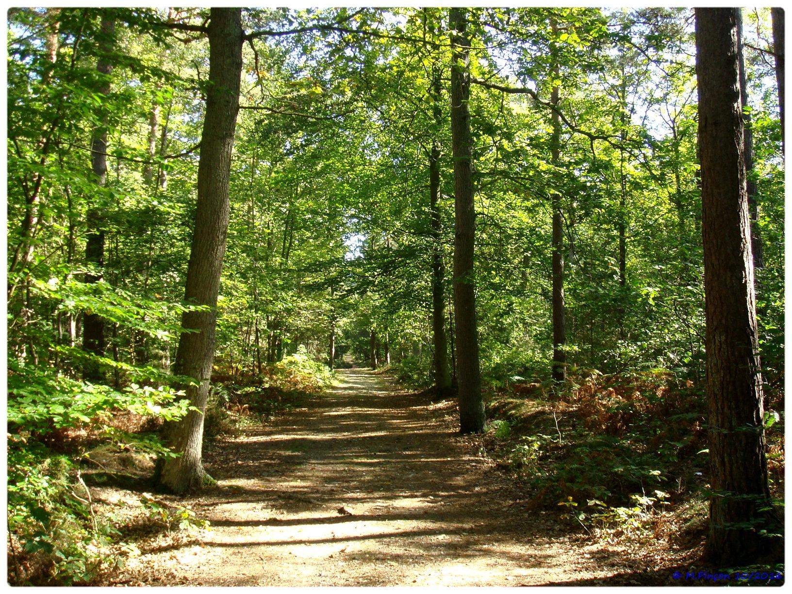 [fil ouvert] la forêt dans tous ses états - Page 6 928789DSC011082